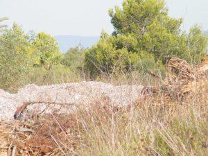 S'Illot abocador 15-09-2014 001
