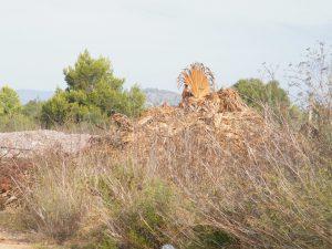 S'Illot abocador 15-09-2014 003