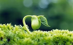Llavor que creix. Les ciències naturals han de basar-se en l'observació de la naturalesa