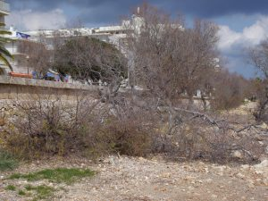 arbres s'IllotP1020733
