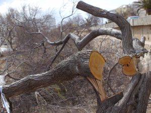 arbres s'IllotP1020737